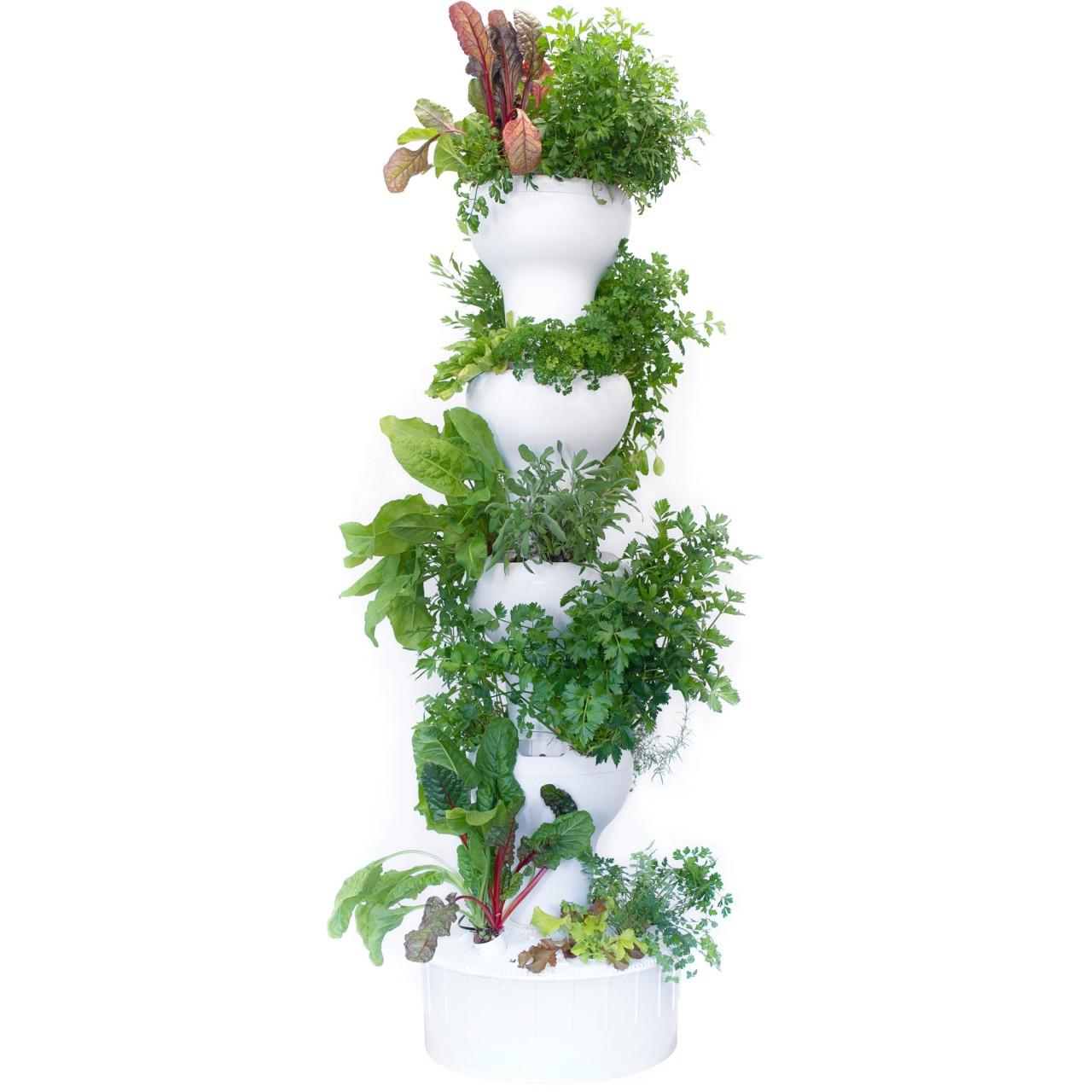 Pflanzsäule 40 Hydrokultur bepflanzt