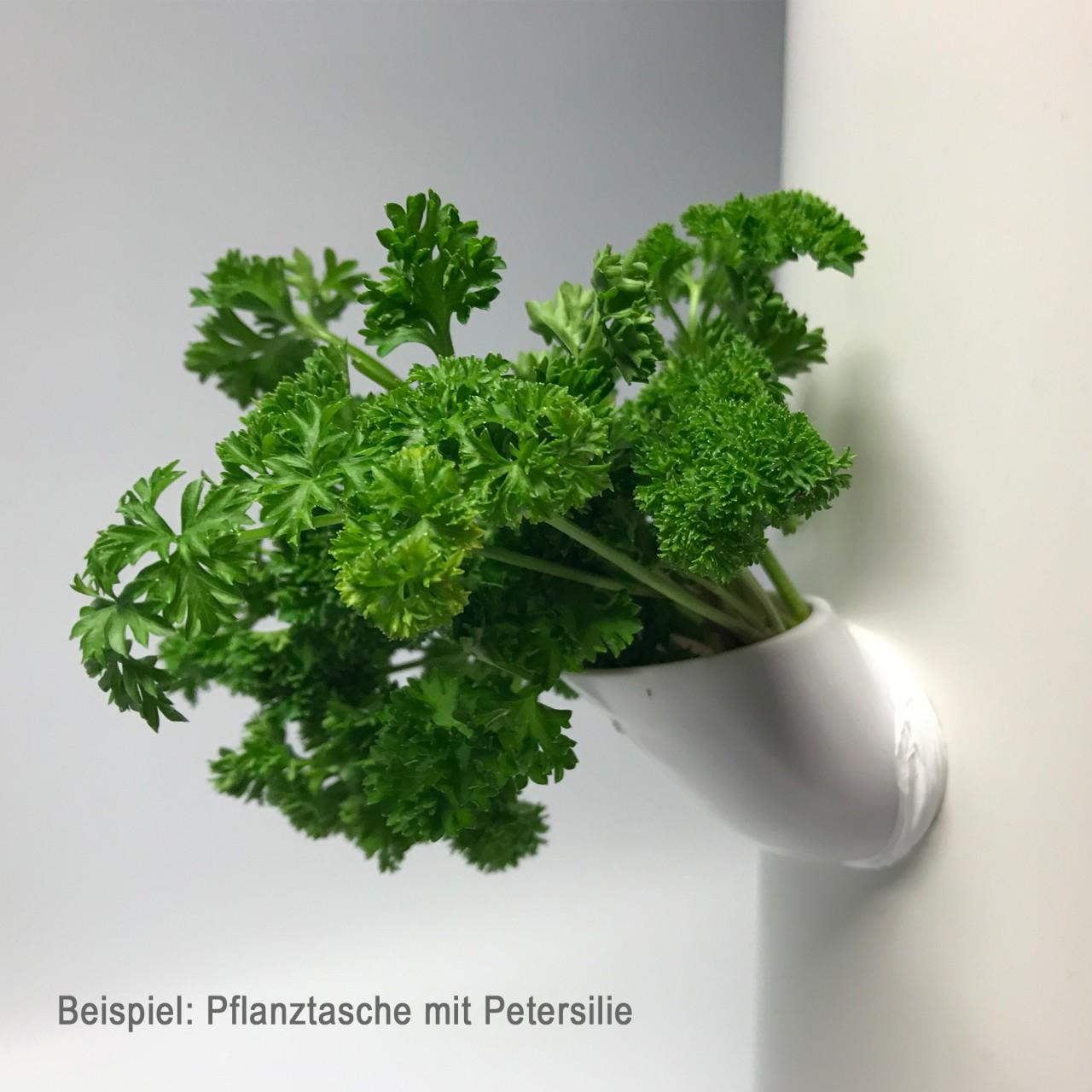 Beispiel DIY Pflanztasche mit Petersilie