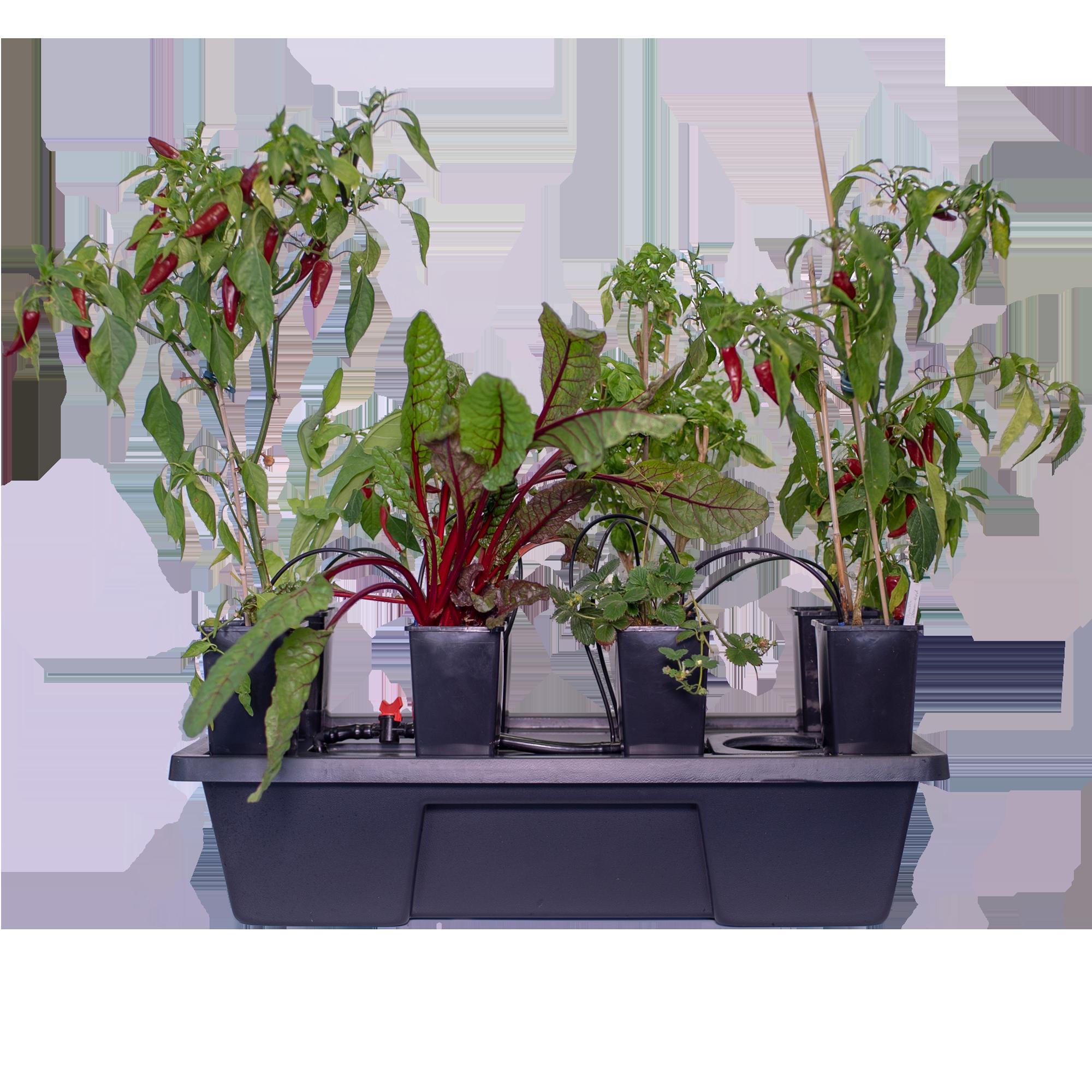 Atami Wilma System Mini 8 Pflanzen 2L Topf