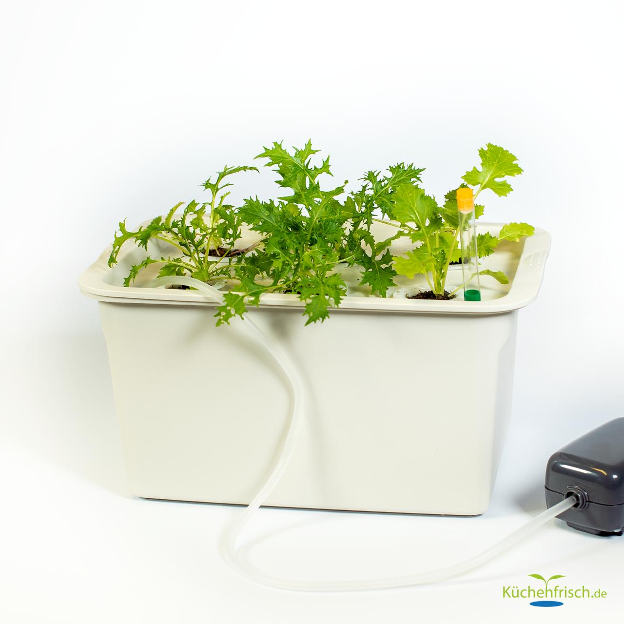 Indoorgarten DWC-Set 6 Pflanzen Beispiel mit Pflanzen
